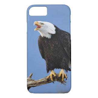 Coque iPhone 7 Eagle chauve appelant, Homer, Alaska, Haliaetus