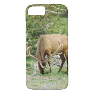 Coque iPhone 7 Élans avec des andouillers Yellowstone de velours
