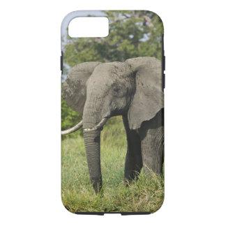 Coque iPhone 7 Éléphant africain, masai Mara, Kenya. Loxodonta