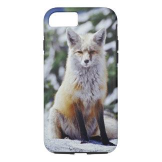 Coque iPhone 7 Fox rouge se reposant sur la banque de neige,