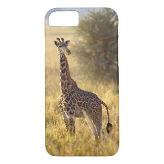 Coque iPhone 7 Girafe juvénile, camelopardalis 2 de Giraffa