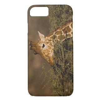Coque iPhone 7 Girafe réticulée, camelopardalis de girafe