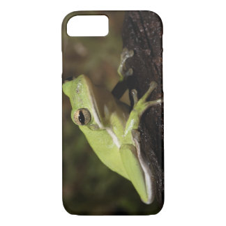 Coque iPhone 7 Grenouille d'arbre verte, cineria de Hyla,