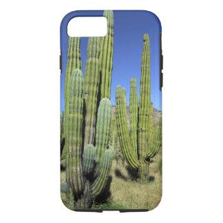 Coque iPhone 7 Le Mexique, Sonora, São Carlos. Tuyau de Saguaro
