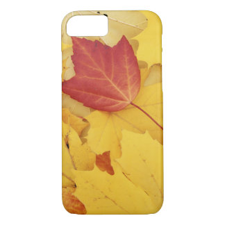 Coque iPhone 7 Les Etats-Unis, Washington, arborétum de pinson,