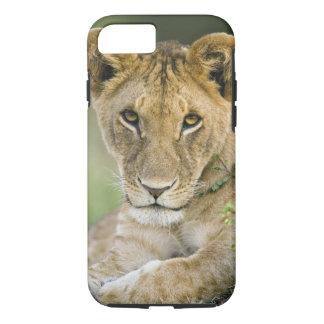 Coque iPhone 7 Lion, Panthera Lion, masai Mara, Kenya