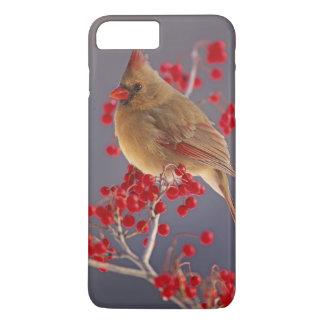 Coque iPhone 7 Plus Cardinal du nord féminin parmi l'aubépine