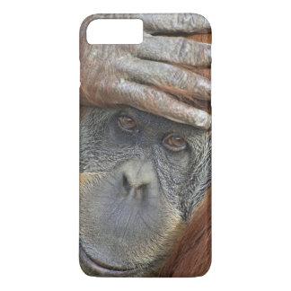 Coque iPhone 7 Plus Orang-outan femelle captif de Sumatran