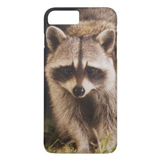 Coque iPhone 7 Plus Raton laveur du nord, lotor de Procyon, adulte à