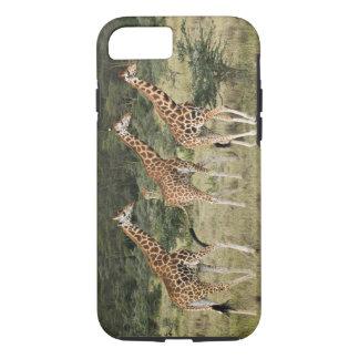 Coque iPhone 7 Trio des girafes de Rothschild, lac Nakuru