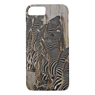 Coque iPhone 7 Troupeau des zèbres de Burchell buvant de Mara