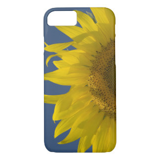 Coque iPhone 8/7 Augmentation de tournesol