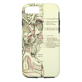 Coque iPhone 8/7 Base vintage d'anatomie de l'external de crâne
