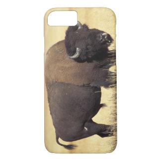 Coque iPhone 8/7 bison, bison de bison, taureau dans le
