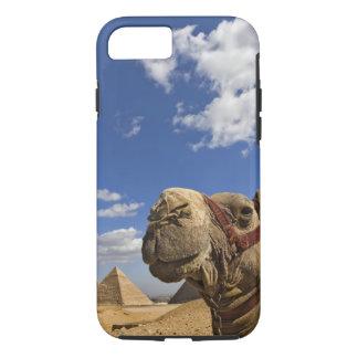 Coque iPhone 8/7 Chameau devant les pyramides de Gizeh, Egypte,