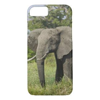 Coque iPhone 8/7 Éléphant africain, masai Mara, Kenya. Loxodonta