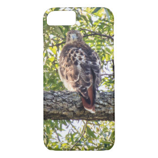 Coque iPhone 8/7 Faucon rouge de queue