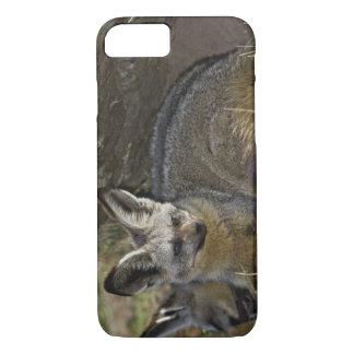 Coque iPhone 8/7 Fox Batte-à oreilles, megalotis d'Otocyon, masais