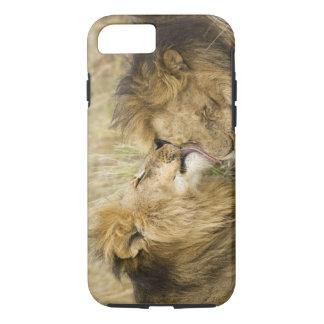 Coque iPhone 8/7 Le Kenya, masai Mara. Plan rapproché d'un lion