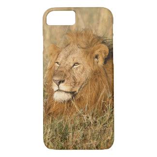 Coque iPhone 8/7 Lion de mâle adulte à la première lumière