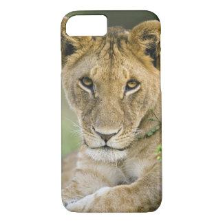 Coque iPhone 8/7 Lion, Panthera Lion, masai Mara, Kenya
