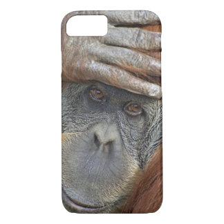Coque iPhone 8/7 Orang-outan femelle captif de Sumatran