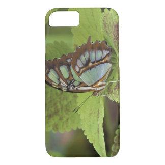 Coque iPhone 8/7 Papillon de malachite (stelenes de Metamorpha)