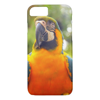 Coque iPhone 8/7 Perroquets