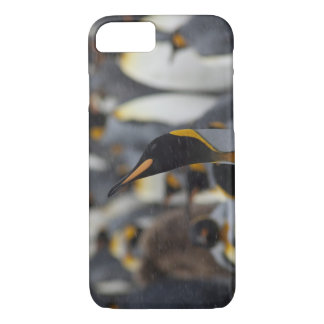 Coque iPhone 8/7 Plaine d'île du sud de la Géorgie, Salisbury. En