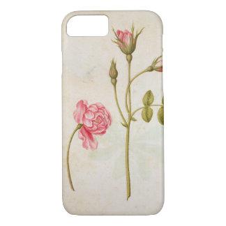 Coque iPhone 8/7 Rose de rose, c.1568