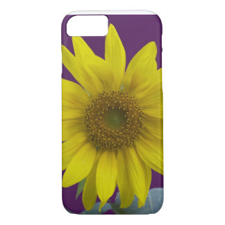 Coque iPhone 8/7 Tournesol sur le pourpre
