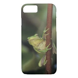 Coque iPhone 8/7 Treefrog vert, Hyla cinerea, adulte sur le jaune