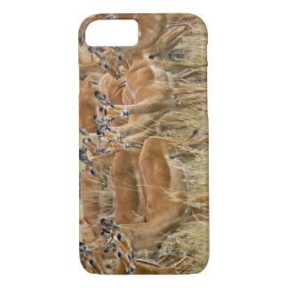 Coque iPhone 8/7 Troupeau d'impala femelle, masai Mara, Kenya