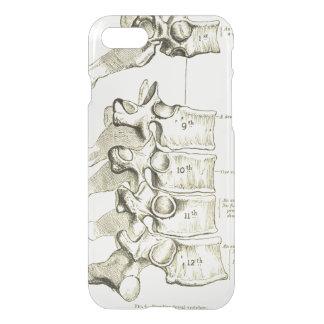 Coque iPhone 8/7 Vertèbres vintages de l'anatomie |