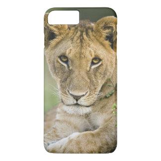 Coque iPhone 8 Plus/7 Plus Lion, Panthera Lion, masai Mara, Kenya