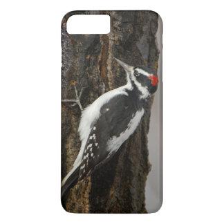 Coque iPhone 8 Plus/7 Plus Mâle velu de pivert sur l'arbre de tremble, Teton