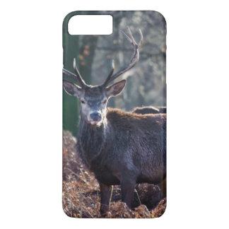 Coque iPhone 8 Plus/7 Plus Portrait de mâle de cerfs communs rouges en hiver