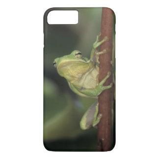 Coque iPhone 8 Plus/7 Plus Treefrog vert, Hyla cinerea, adulte sur le jaune