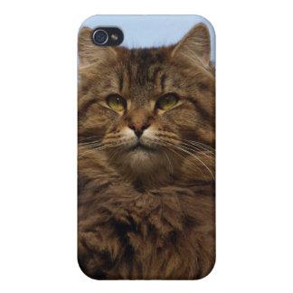 Coque iphone à cheveux longs d'animal de chat