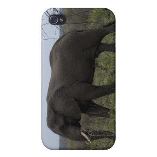 Coque iphone de faune d'éléphant africain