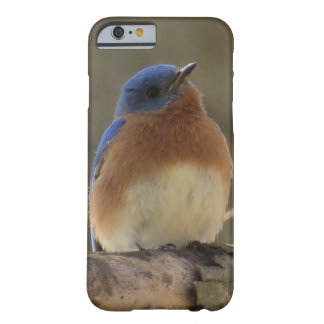 Coque iphone d'oiseau bleu coque barely there iPhone 6