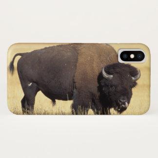Coque iPhone X bison, bison de bison, taureau dans le