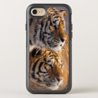 Coque OtterBox Symmetry iPhone 8/7 Deux tigres sibériens ensemble, la Chine