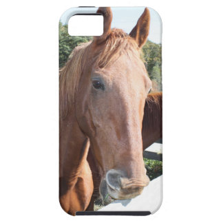 Coque Tough iPhone 5 Duo de cheval