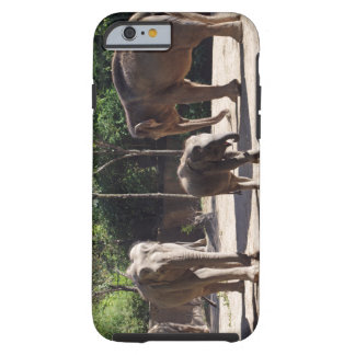 Coque Tough iPhone 6 Éléphants africains