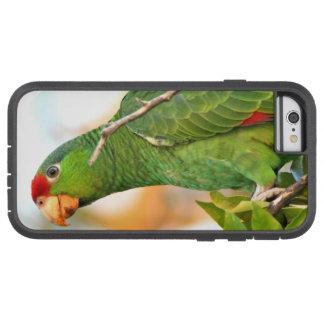 Coque Tough Xtreme iPhone 6 Faune sauvage d'animaux d'oiseaux de perroquet