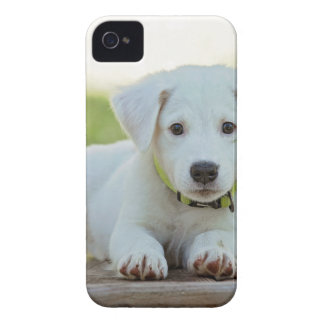 Coques Case-Mate iPhone 4 chiot