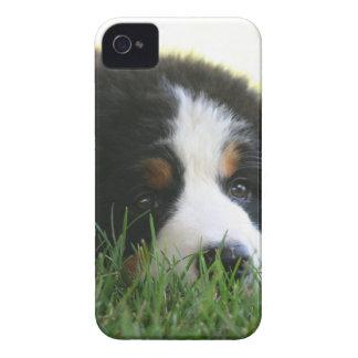 Coques Case-Mate iPhone 4 Chiot de Bernese
