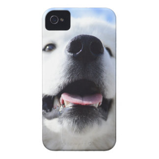 Coques Case-Mate iPhone 4 «Ice Bear» 001