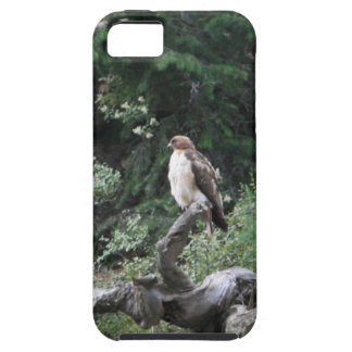 Coques Case-Mate iPhone 5 Faucon ferrugineux